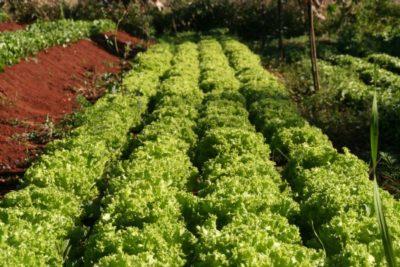 Incentivo a Agricultura Familiar
